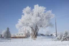 WinterGC4
